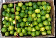 کشف 5 تن لیموی پاکستانی در ایرانشهر