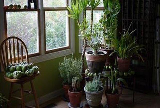 کدام گیاهان برای فنگ شویی مناسب هستند؟