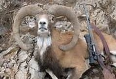 دستگیری شکارچی قوچ وحشی در منطقه شکار ممنوع کوه هوا