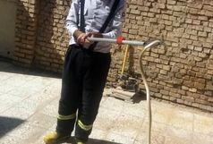 زنده گیری یک حلقه مار توسط آتش نشانان در منزل مسکونی منطقه زرگان+ببینید
