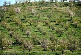 کاهش سهمیه آب باغات حاشیه زاینده رود