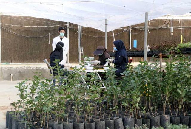 بازدید وزیر جهاد کشاورزی از موسسه دانش بنیان کشت بافت