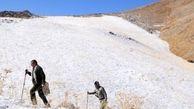 افزایش چشمگیر جمعیت قوچ و میش در پناهگاه حیات وحش سفید کوه ازنا