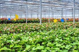 جهش در تولید محصولات کشاورزی در گرو توسعه کشتهای گلخانهای است
