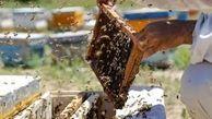 سالانه ۹۰۰ تن عسل در قزوین تولید می شود