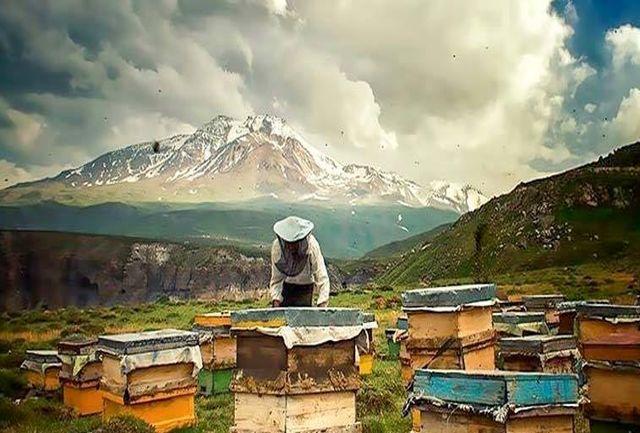 تولید سالانه بیش از 6هزار تُن عسل در اردبیل