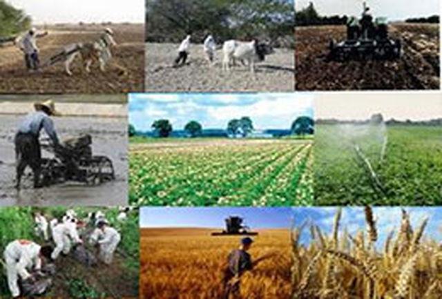 میزان تولید محصولات کشاورزی از مرز 110 میلیون گذشت