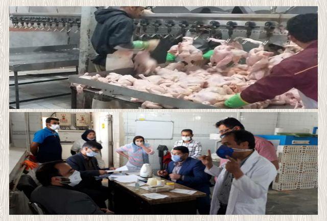 جریمه ۱۱ واحد توزیع و عرضه مرغ در اندیمشک