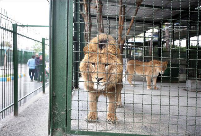 نباید ساختار باغ وحشی در کشور وجود داشته باشد/  هیچ یک از حیوانات برای انتقال به باغ وحش از طبیعت جدا نمی شوند