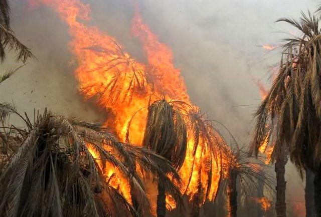 ۱۷۰۰ نخل خرما و انبه در نیکشهر سیستان وبلوچستان طعمه حریق شد