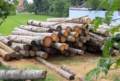 کشف 5 تن چوب قاچاق در آستانهاشرفیه