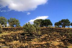 آتشسوزی در «شلم» در اولین روز تابستان