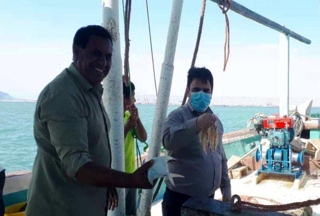 بازدید مدیرکل شیلات هرمزگان از روند صید میگو در استان