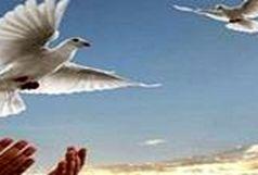 آزادی ۸ زندانی جرائم غیر عمد با بدهی ۱۷ میلیارد ریالی در هرمزگان