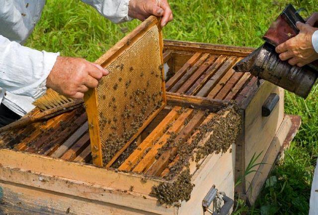 توزیع ۸۸۰ تن شکر بین زنبورداران  لرستان / فعالیت  ۳ هزار و ۱۵۰ زنبوردار در استان