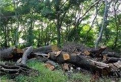 ممنوعیت 8 ماهه قطع درخت در کلیبر