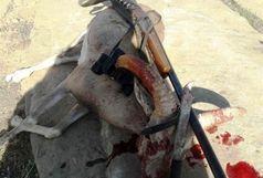 دستگیری شکارچیان غیرمجاز قوچ وحشی با کمک عکس های یادگاری