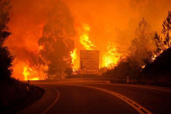آتشسوزی جنگلهای استرالیا را در تلویزیون ببینید