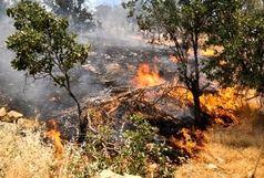 تکذیب آتش سوزی در باغ پرندگان ناژوان/ حریق مزرعه گندم جنب باغ پرندگان اطفاء شد