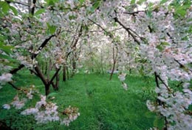 پایکوبی بهار به سبک مازنیها