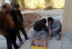 دستگیری 3 گروه متخلف شکاردر سلسله