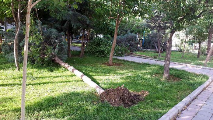 طوفان دیشب موجب سقوط 3 درخت روی ماشین شد / در همه مناطق تعداد زیادی درخت از ریشه درآمدند / ببینید