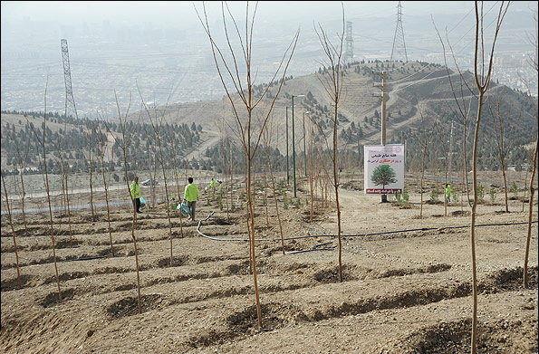 درختکاری در نوار مرزی دامنه جنوبی البرز