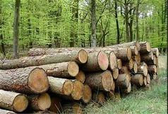 جریمه نقدی قاچاقچیان چوب در فومن