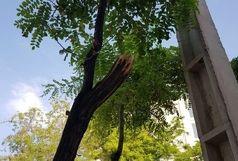 بریدن درخت کهنسال در الموت قزوین فوت ۲ کارگر را رقم زد