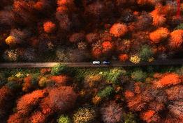پارک ژوراسیک ایران برویم/ جنگلی بازمانده از عصر یخبندان