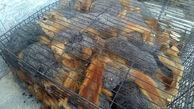 کشف 128 بطانه سنجاب در بیجار