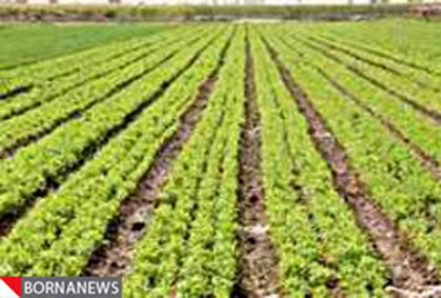 دانش آموختگان رشته کشاورزی و بیکاران زمین دریافت میكنند