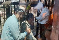 حادثه در قفس شیرهای دهکده طبیعت قزوین به خیر گذشت
