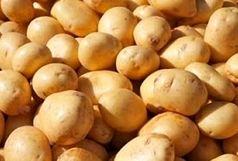 10 تن سیب زمینی در خرمشهر معدوم شد