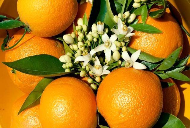 با این میوهی نارنجی به جنگ کرونا بروید!