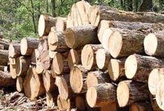 کشف بیش از 4 تن چوب جنگلی قاچاق در رضوانشهر