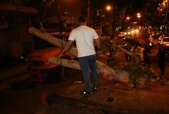 سقوط درختان بر اثر وزش باد شدید