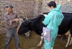 استان همدان از وجود هرگونه کانون بیماری دامی پاک می باشد