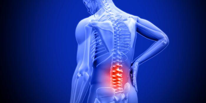 تجمع چربی عامل اصلی گودی کمر/ انجام تمرینات ورزشی در درمان کمردرد موثر است